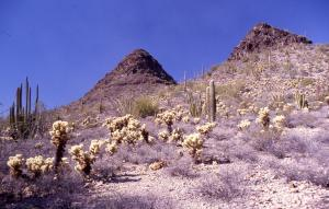 AZ_Ajo_Mountains_Twin_Peaks