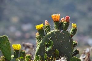 cactus-166240_640