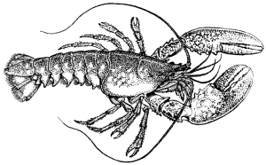 Lobster_(PSF)